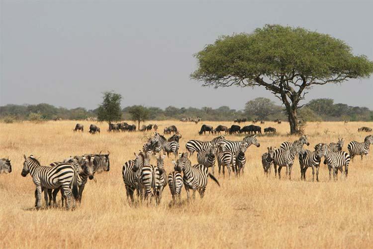 کنیا، سفر به قلب حیات وحش آفریقا