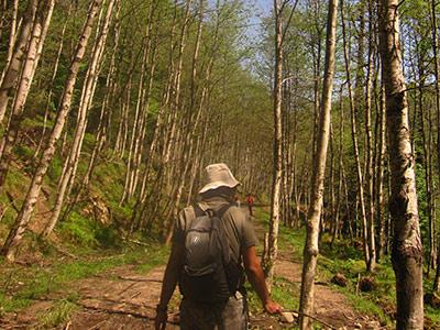 تور جنگل پیمایی لیسار.amordadtour.com