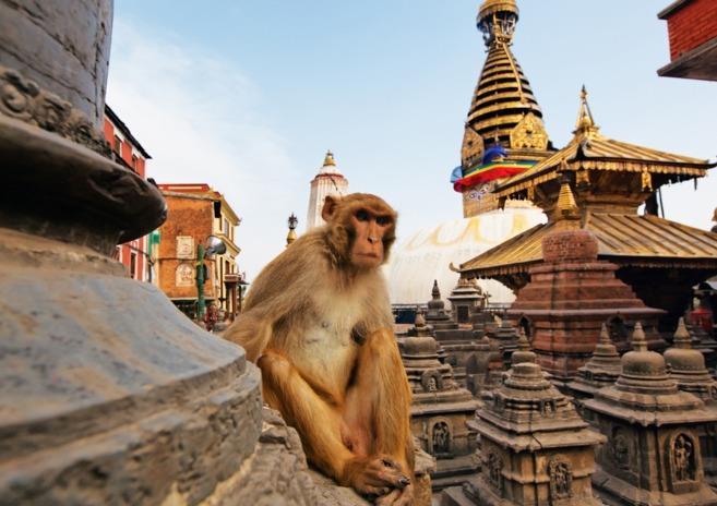 تور نپال.amordadtour.com