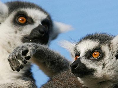 تور ماداگاسکار تور ماداگاسکار نوروز 1401