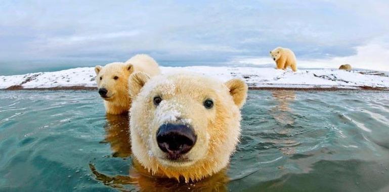 تور قطب جنوب.amordadtour.ir