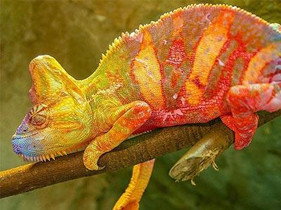 تور ماداگاسکار.amordadtour.com