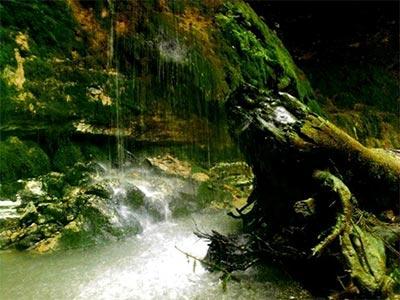 تور جنگل انجیلی آبشار ولیلا.amordadtour.com