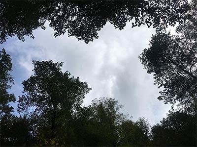 تور جنگل کیاسلطان.amordadtour.com