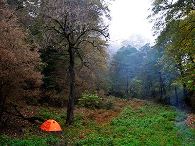 تور جنگل نقله بر.amordadtour.com