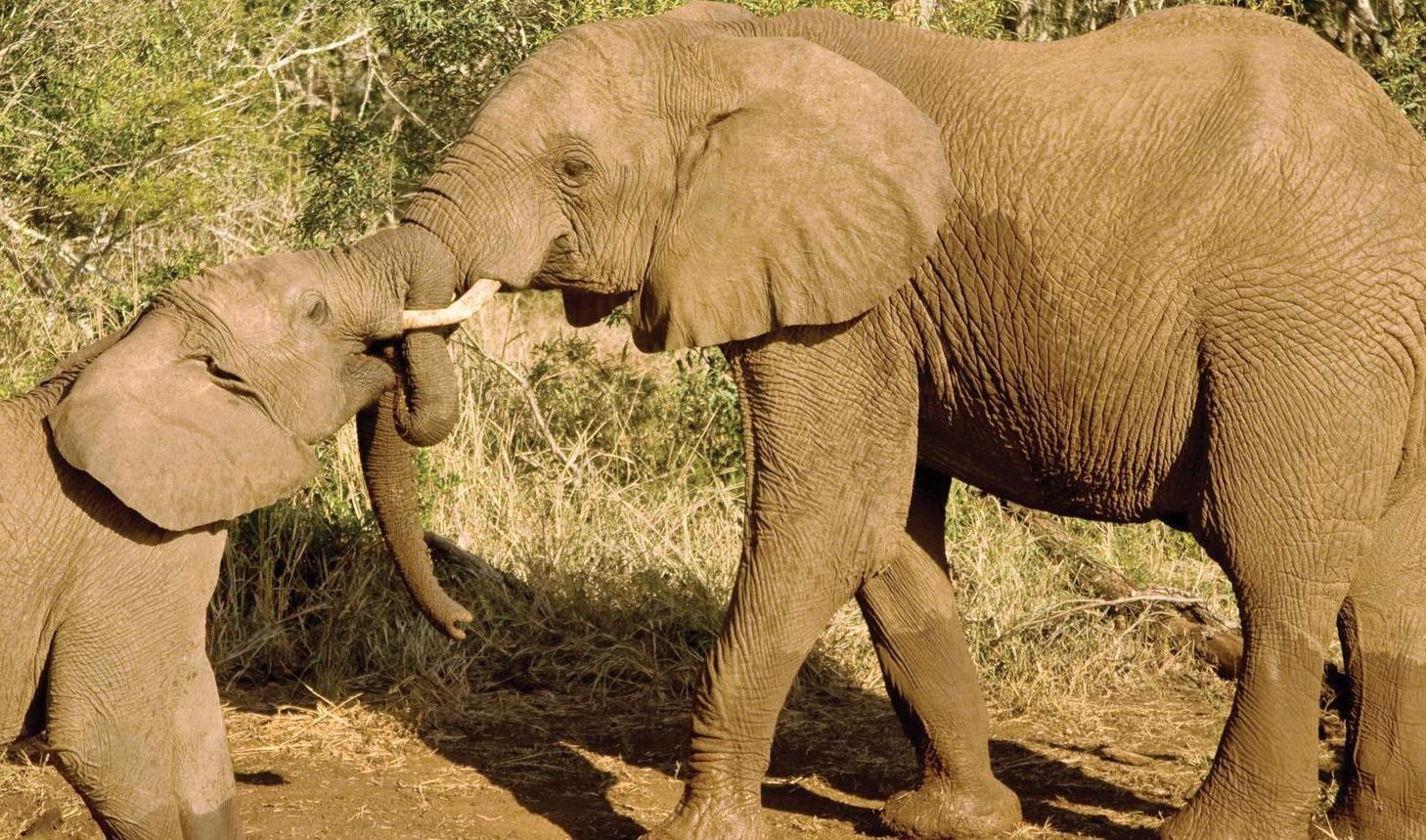 تور کنیا.amordadtour.ir