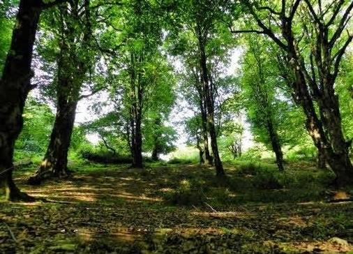 تور جنگل الیمستان .amordadtour .com