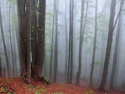 تور جنگل راش.amordadtour.com