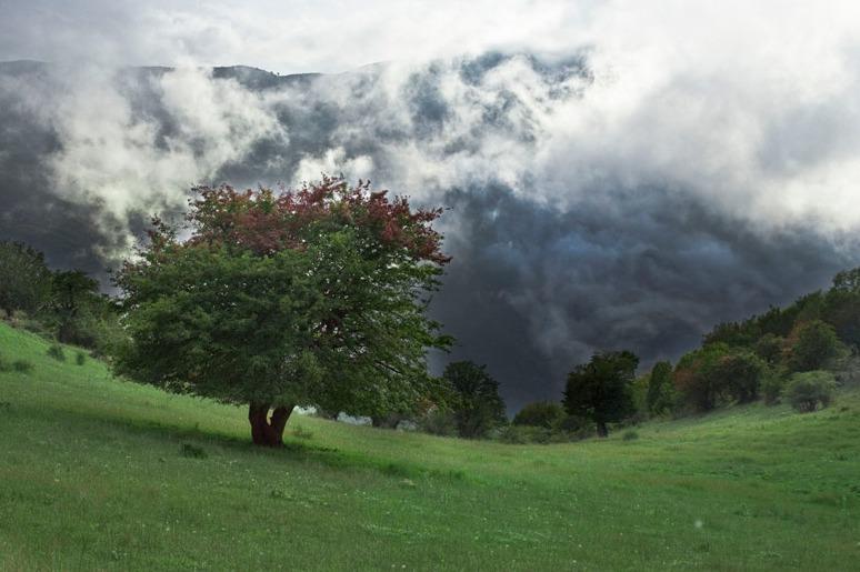 جنگل ابر خرقان بسطام.amordadtour.com