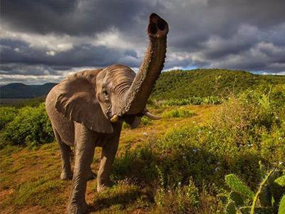 تور آفریقای جنوبی.amordatour.com