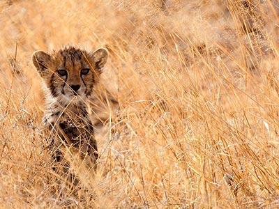 تور کنیا.amordadtour.com