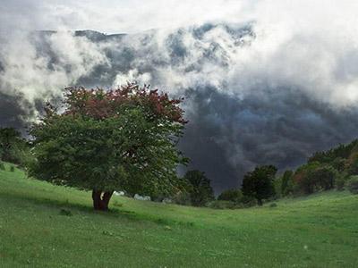 تور جنگل ابر، خرقان و بسطام.amordadtour.com